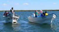 La Procuraduría Federal de Protección al Ambiente (PROFEPA) realizó un operativo de vigilancia en Puerto Adolfo López Mateos, municipio de Comondú, Baja California Sur, a fin de verificar que las […]