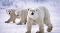 La Comisión para la Cooperación Ambiental (CCA) recibió una queja del Center for Biological Diversity en la que asevera que Canadá incurre en omisiones en la aplicación efectiva de la […]