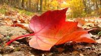 Ya nos alcanzó el otoño. La tercera estación del año que se abre espacio entre el verano y permite la entrada del invierno. De manera más específica, que inicia entre […]