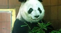 Al ser México la única nación latinoamericana con especímenes de Panda Gigante y en el marco del 89 Aniversario del Zoológico de Chapultepec, la secretaria del Medio Ambiente, Martha Delgado […]
