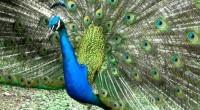 por: Ana Herrera Profepa confiscó caballos, guacamayas, aves exóticas y cisnes negros, propiedad del narcotraficante Los animales fueron enviados a una Unidad de Manejo para la Conservación de la Vida […]