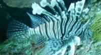 Durante la última década la costa sur de Quintana Roo, en la Península de Yucatán ha sufrido cambios causados por la perturbación humana, principalmente por la explotación pesquera y el […]