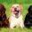 Sin lugar a dudas una de los temas que más cuidan los amantes de las mascotas es su pelaje, que sea vea sedoso, brilloso, sin nudos y acompañado de un […]