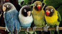 La Procuraduría Federal de Protección al Ambiente (PROFEPA) en días pasados ejecutó un operativo, en el cual se sorprendió a una persona comercializando en la vía pública, entre otra aves […]