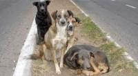 En el marco del Día Internacional del Perro Callejero, especialistas del Programa Pedigree Adóptame, dieron a conocer que se calcula que en México existen muchos perros abandonados y que la […]