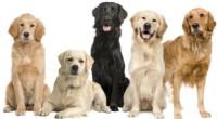 Contar con la compañía y el amor de una mascota, es uno de los grandes privilegios de los seres humanos, quienes siempre aprecian con agrado que al llegar a casa, […]