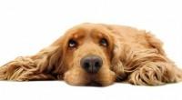 FullTrustes la nueva marca mexicana de alimento súper premium para perros del grupo Neovia, división de salud animal de Invivo, empresa global de origen francés y líder mundial en el […]