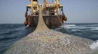 De acuerdo con las Naciones Unidas, una de las mayores amenazas para la sostenibilidad de los recursos pesqueros mundiales es la pesca ilegal no declarada y no reglamentada (INDNR). Asimismo, […]