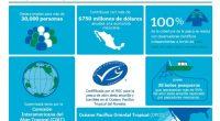 Sólo 12% de la pesca mundial está certificada por el estándar más alto de pesca silvestre, la del Marine Stewardship Council, porcentaje en el que una industria de México se […]