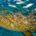A partir del primer minuto del domingo pasado inició la temporada de pesca de todas las especies del pez mero en aguas de jurisdicción federal frente a los estados de […]