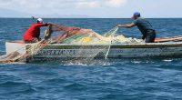 En México menos de la mitad de los recursos pesqueros aptos para extracción cuentan con información actualizada sobre su disponibilidad, y en los demás casos la información con la que […]