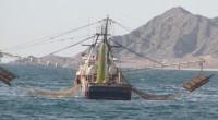 De acuerdo a un informe del Instituto Mexicano para la Competitividad (IMCO), el sector pesquero nacional se caracteriza por sobreexplotar la biodiversidad de costas y mares lo que desemboca en […]