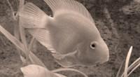 Integrada por 450 mil ejemplares, la colección de peces dulceacuícolas que alberga la Escuela Nacional de Ciencias Biológicas del Instituto Politécnico Nacional (IPN), es la más importante del país y […]