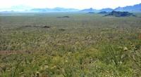 """En su mensaje del día 2 pasado, correspondiente a la entrega de su primer informe de gobierno, el Presidente Enrique Peña Nieto dijo: """"Para preservar nuestro entorno natural promovemos un […]"""