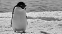 Los cambios en la temperatura también tienen efectos sobre las estrategias de alimentación de algunas especies que dependen de plataformas de hielo para cazar a sus presas. Por ejemplo, una […]