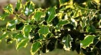 La Comisión Nacional Forestal (Conafor) informó que desarrolla tecnología avanzada para diagnóstico y tratamiento de alrededor de 43 mil hectáreas de árboles en el país, que son infectados por plagas. […]