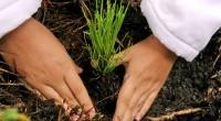 Aplicar acciones conjuntas a favor de la biodiversidad, es uno de los objetivos de la Comisión Nacional Forestal (Conafor) y el Instituto Nacional de Economía Social (INAES), al firmar un […]