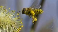 Las abejas y otras especies de insectos silvestres son cruciales en el proceso de polinización de diversos productos agrícolas que son vitales para la alimentación de los seres humanos, […]