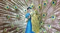 Zacango recibe nuevas especies Al Zoologico de Zacango arribaron, en días pasados, diversas especies que se encontraban bajo el resguardo de la Procuraduría General de la Republica, y, a través […]