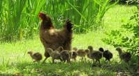 Sustentabilidad, productividad ganadera y bienestar animal son rubros que establecen sinergias en la actual actividad pecuario de granja y mascotas. El caso más ilustrativo es la organización civil The Nature […]