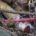 """Con el propósito de reducir el uso de popotes y de plásticos en general, la Secretaría de Medio Ambiente y Recursos Naturales (Semarnat) lanzó la campaña """"Sin popote está bien"""", […]"""