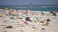 En el mundo se producen alrededor de 300 millones de toneladas de plástico cada año.El plástico es una de las invenciones que definen nuestra era, sin embargo su impacto negativo […]