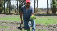Autoridades de la delegación Tláhuac, dieron a conocer que se estima una producción de romeritos superior a las seis mil toneladas para esta Semana Santa, siendo San Andrés Mixquic, en […]