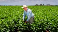 La Secretaría de Agricultura, Ganadería, Desarrollo Rural, Pesca y Alimentación (SAGARPA) informó que incluirá a 250 mil productores durante el proceso de apertura al padrón de beneficiarios del programa PROAGRO […]