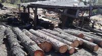 La Procuraduría Federal de Protección al Ambiente (PROFEPA) aseguró de manera precautoria 7.6 m3rollo de madera de Pinoen un Centro de Almacenamiento y Transformación de Materias Primas Forestales Maderables (CAT), […]