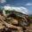 Al cierre de la temporada 2018-2019 el Santuario Tortuguero de Escobilla, en Oaxaca, registró1 millón 365 mil 886 nidos, detortuga golfina (Lepidochelysolivacea),con un porcentaje del 13 % en la […]