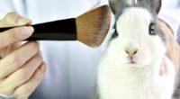 A nivel mundial se destinan millones de dólares a la industria cosmética, innovando con fórmulas y presentaciones para tener mayor reconocimiento y participación en el mercado. Para probar su eficacia, […]