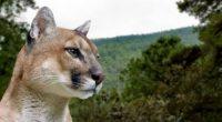 Se dio a conocer que la Comisión Nacional de Áreas Naturales Protegidas (CONANP), en conjunto con el Estado de Hidalgo, conformó un grupo de expertos para realizar un trabajo de […]