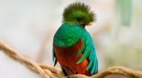 Una pareja de quetzales de 4 años de edad, nacidos como parte de un programa de reproducción de esta especie en peligro de extinción, se exhibe ya en el aviario […]