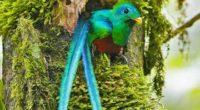 """La aerolínea Volaris dio a conocer que la película documental """"Serpiente Emplumada"""", que recorre las aventuras del fotógrafo y cineasta Ricky López Bruni por las selvas mesoamericanas en busca de […]"""