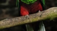 """México.- El tercer aviario más grande del mundo, """"El Nido"""", ubicado en el municipio de Ixtapaluca, estado de México a poco más de dos horas del Distrito Federal, llevo a […]"""