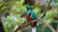 El quetzal es una de las aves sagradas para el mundo Maya, a grado tal que en Guatemala se le dio su nombre a la moneda, mientras que en Mesoamérica […]
