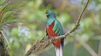 Los trabajos de conservación del quetzal han permitido que en 25 años se le vea volar en mayor número en la Reserva de la Biosfera El Triunfo, Chiapas. Esta ave, […]