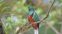 El quetzal es ave simbólica de la cultura prehispánica de México, pero con el tiempo ha estado en peligro de extinción, por lo que la Unidad de Manejo para la […]