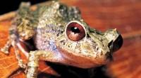 Por su contribución al conocimiento de un anfibio endémico de México, sobre todo por identificar una capacidad de adaptación a alternaciones de su hábitat natural por actividades humanas, el biólogo […]