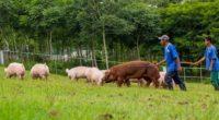 Con el objetivo de promover el bienestar animal durante su sacrificio en rastros municipales y privados para el consumo humano, el Servicio Nacional de Sanidad, Inocuidad y Calidad Agroalimentaria (SENASICA) […]
