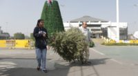 El Gobierno de la Ciudad de México invita a la población a participar en la campaña de acopio de árboles de navidad, que se realiza en 15 Alcaldías para ayudar […]
