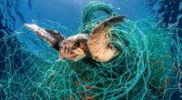 Un nuevo informe publicado por World Animal Protection encontró que las 25 principales compañías pesqueras del mundo están progresando para detener sus redes de pesca perdidas, ya que estas están […]