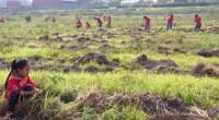 El pasado fin de semana se llevó a cabo una jornada de reforestación del parque estatal «Sierra Hermosa» ubicado en el municipio de Tecamac, ello por parte de la Industtia […]