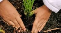Durante la reunión climática efectuada en Nueva York, diversos sectores empresariales mundiales se comprometieron a favor de la reforestación mundial, al respecto, Irene Rosenfel, presidenta y CEO de Mondelēz International, […]