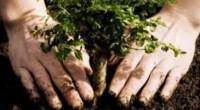 El mejor legado que un gobierno de la república puede dejar es plantar más de 18 millones de árboles en partes de la zona metropolitana del Valle de México para […]