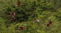 Gracias al programa de reintroducción de la guacamaya roja del parque temático Xcaret, ubicado en Riviera Maya, en el estado de Quintana Roo, permite que en las zonas selváticas de […]