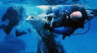 Los lobos marinos son una especie prioritaria, sin embargo presentan algunos problemas ocasionados por las actividades de pesca comercial, y debido a que los islotes de la isla Espíritu Santo […]