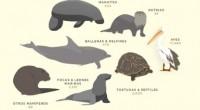 El parque y zoológico SeaWorld que mantiene un programa de rescate y cuidado de animales alcanzó el record de 28.000 animales rescatados en sus más de 50 años de experiencia. […]