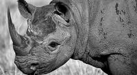 UICN / Efe La última actualización de la Lista Roja de Especies Amenazadas elaborada por la Unión Internacional para la Conservación de la Naturaleza (UICN) aporta un buen número de […]