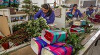 La producción de rosas en el país registró un aumento preliminar de 5.6 por ciento entre 2015 y 2016, lo que garantiza el abasto durante el año de esta flor […]